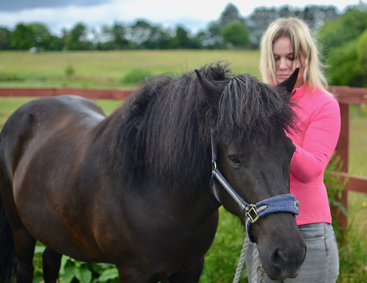 Reiki Healing & Fjernhealing af Dyr | Dyrehealing til Hund, Hest, Kat m.v.