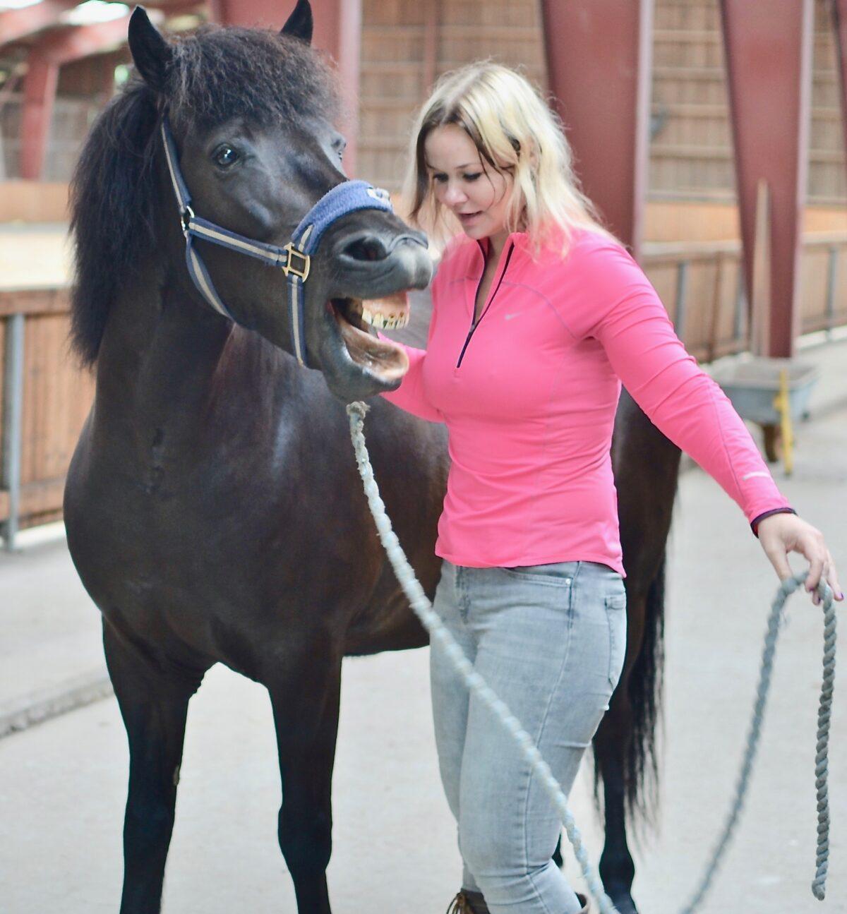 Reiki healing af hest